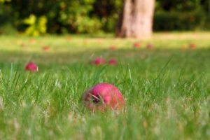 trávník na podzim