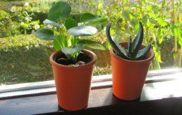 pokojové rostliny