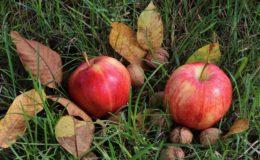 podzimni_zahrada