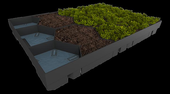 zelená střecha ECOSEDUM